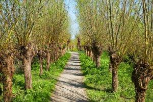 wandelen - mooiste wandeling - zuid-holland